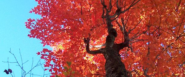朝活始めるなら秋でしょ!