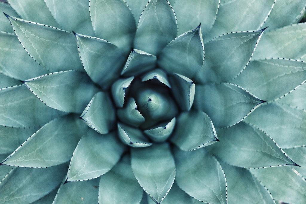 植物の情報量に癒される