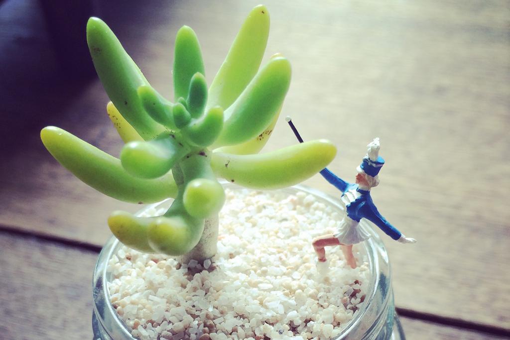 テラリウム始めてみたら、職場が植物男子だらけだった
