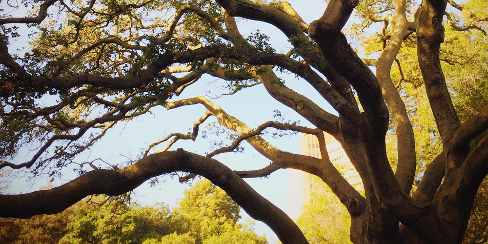 樹木ハカセになろう|素朴なものを能動的に理解するということ