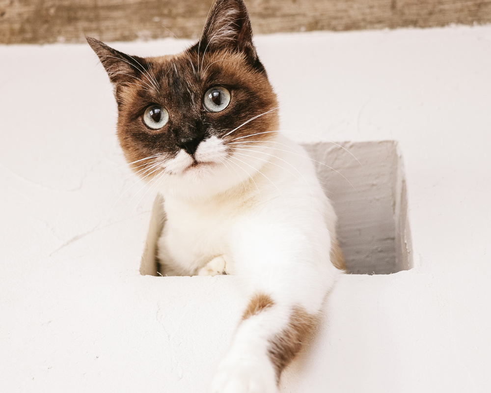  猫背を無意識に矯正する方法 筋トレも姿勢矯正下着も不要