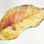 ボタニカルアート入門 植物画の第一歩「葉っぱを描く」