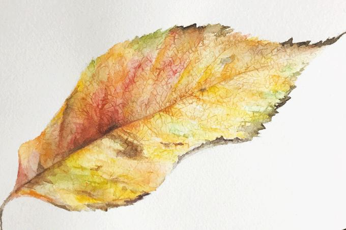 ボタニカルアート入門 植物画の第一歩は「葉っぱ」